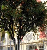 la perle de la France – Menton (2)
