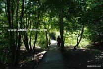 The Plitvice Lakes National Park, Croatia (5)