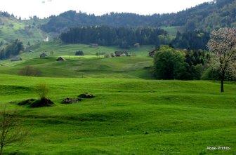 Swiss Beauty (10)