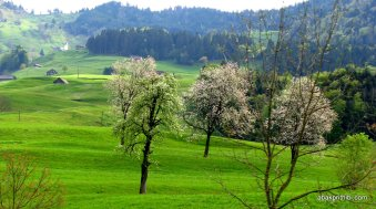 Swiss Beauty (11)