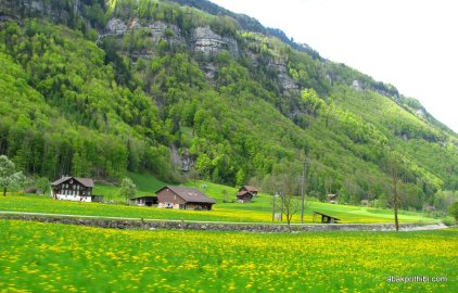 Swiss Beauty (18)