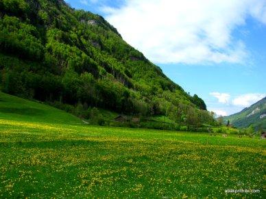 Swiss Beauty (19)