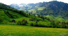 Swiss Beauty (20)