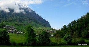Swiss Beauty (8)