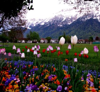 Interlaken, Switzerland (12)