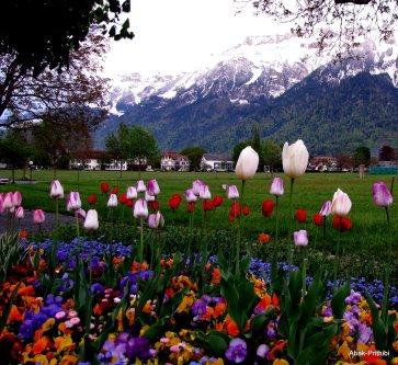 Interlaken, Switzerland (12)