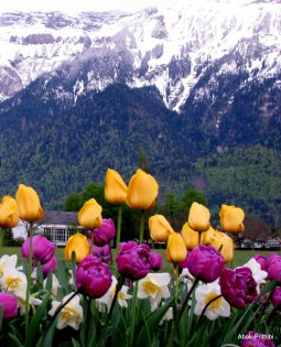 Interlaken, Switzerland (16)