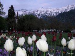 Interlaken, Switzerland (19)