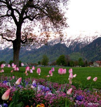 Interlaken, Switzerland (8)