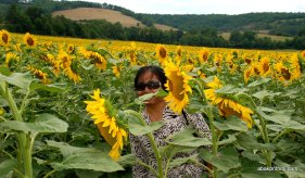 Sunflower field in South of France (15)