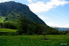 Way to Mt Rigi, Switzerland (14)