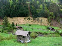 Way to Mt Rigi, Switzerland (4)