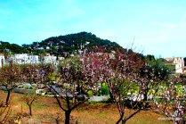 Giardini di Augusto, Capri, Italy (5)