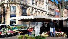 Flowers shop - (7)
