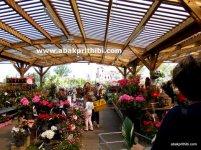 Flowers shop - (8)