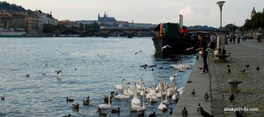 The Vltava river, Czech Republic (11)