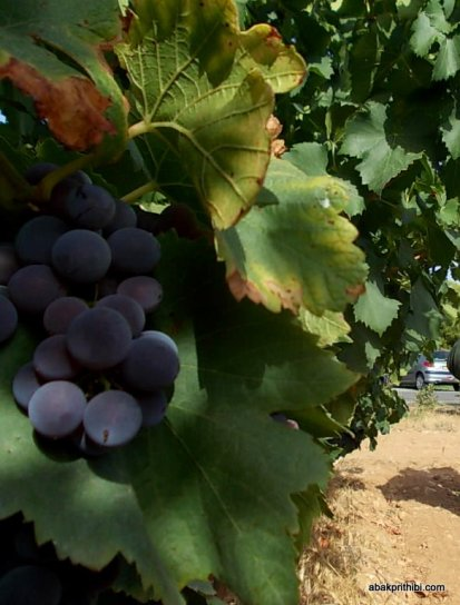 Viticulture in France (2)