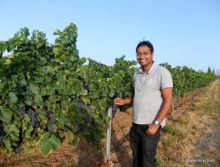 Viticulture in France (6)