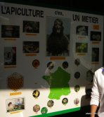 Apiculture in France (1)