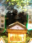 Apiculture in France (3)