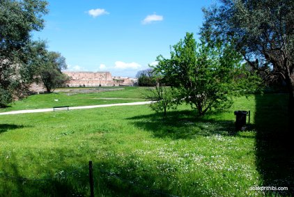The Palatine Hill, Rome (14)