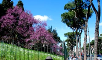 The Palatine Hill, Rome (3)
