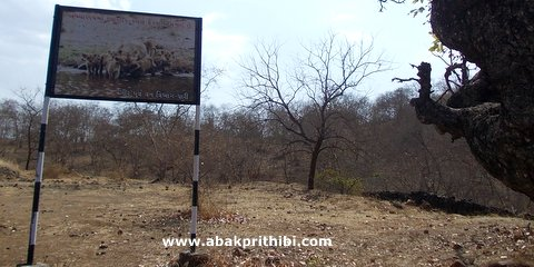 Gir Forest, Gujarat, India (1)