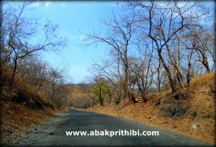 Gir Forest, Gujarat, India (2)