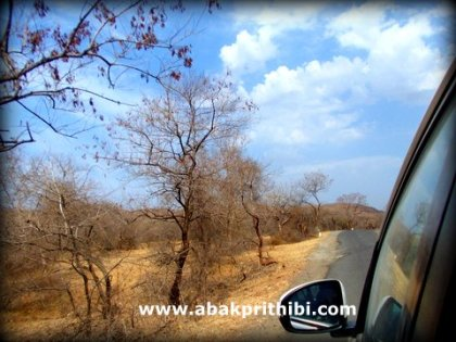 Gir Forest, Gujarat, India (3)