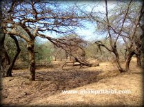 Gir Forest, Gujarat, India (4)
