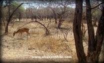 Gir Forest, Gujarat, India (5)