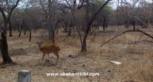 Gir Forest, Gujarat, India (6)