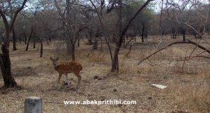 Gir Forest, Gujarat, India (6)