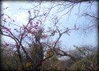 Gir Forest, Gujarat, India (7)