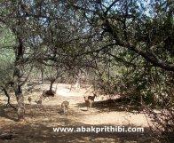 Gir Forest, Gujarat, India (8)