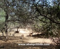 Gir Forest, Gujarat, India (8)