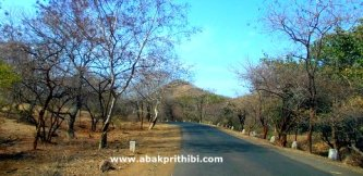 Gir Forest, Gujarat, India (9)