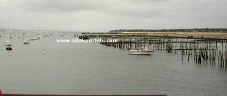 Oyster Farming in Arcachon Basin, France (5)