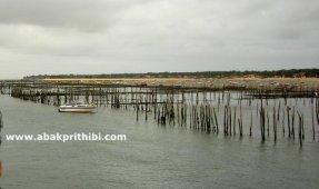Oyster Farming in Arcachon Basin, France (6)