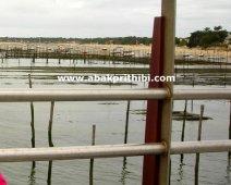 Oyster Farming in Arcachon Basin, France (9)