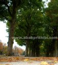 Parc du Cinquantenaire, Brussels, Belgium (12)