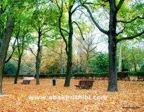 Parc du Cinquantenaire, Brussels, Belgium (2)