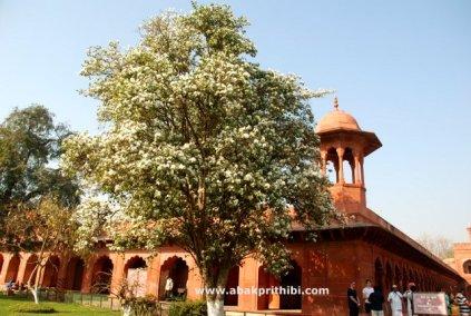 The Taj Mahal, Agra, India (9)